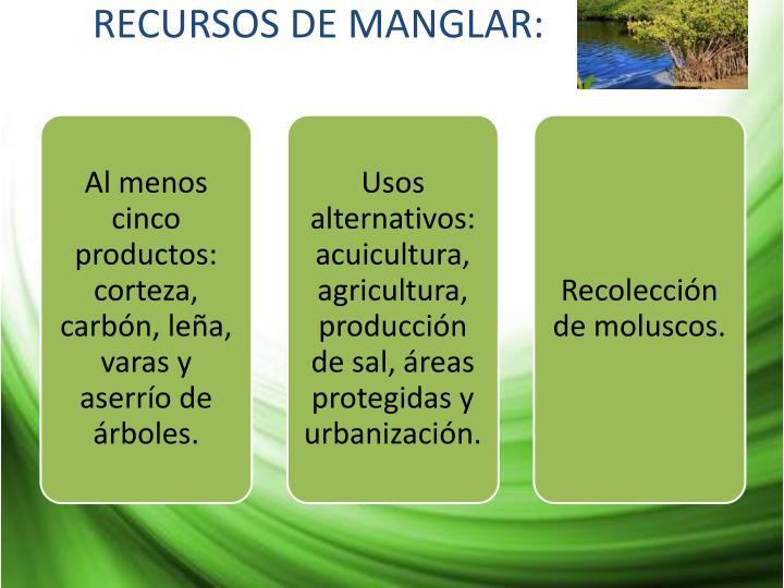 RECURSOS DE MANGLAR: