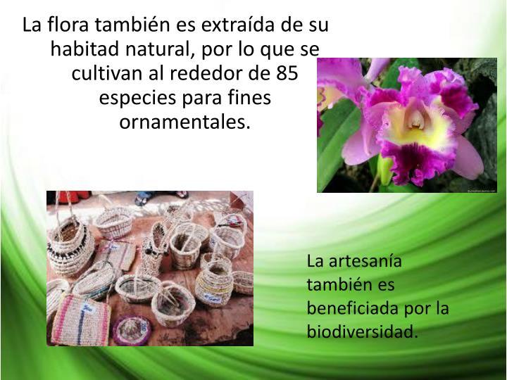 La flora también es extraída de su habitad natural, por lo que se cultivan al rededor de 85 especies para fines ornamentales.