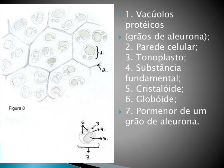 1. Vacúolos protéicos