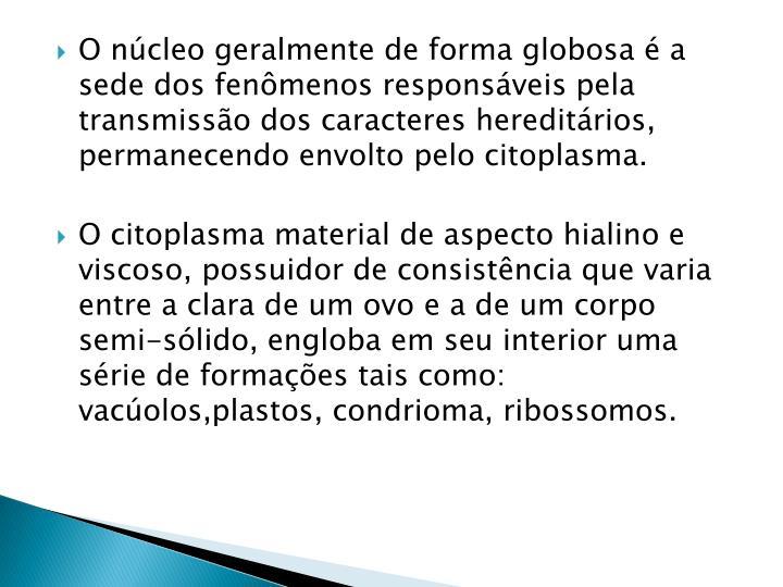 O núcleo geralmente de forma globosa é a sede dos fenômenos responsáveis pela transmissão dos caracteres hereditários, permanecendo envolto pelo citoplasma.