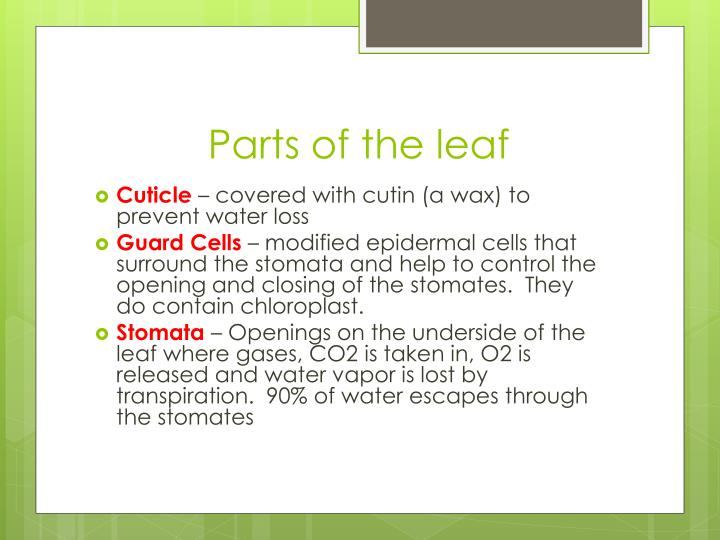 Parts of the leaf