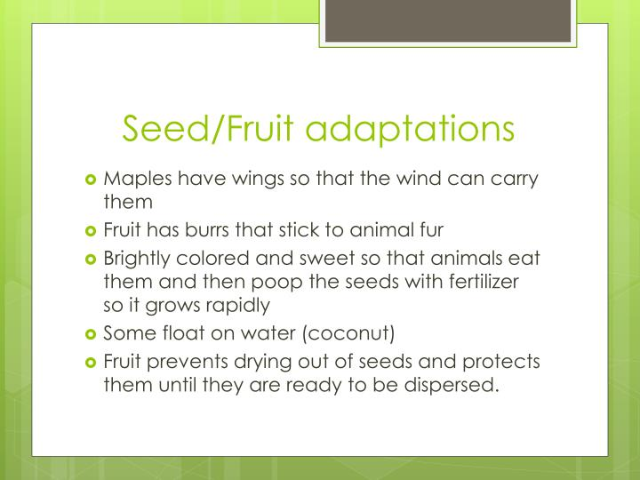 Seed/Fruit adaptations