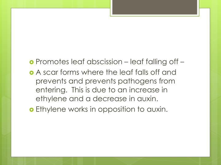 Promotes leaf abscission – leaf falling off –