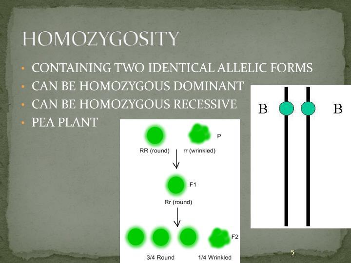 HOMOZYGOSITY