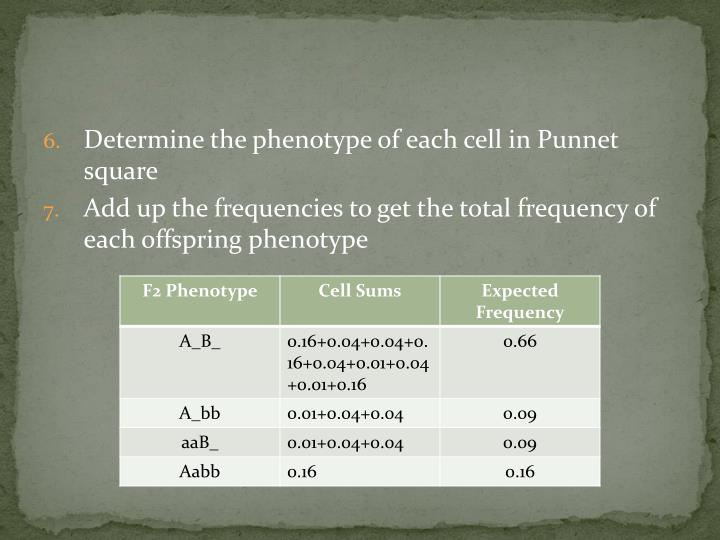 Determine the phenotype of each cell in