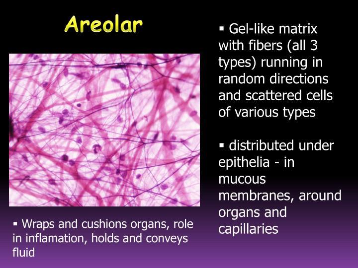Gel-like matrix with fibers