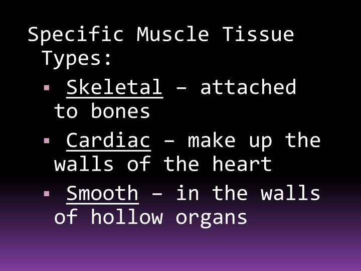 Specific Muscle Tissue Types: