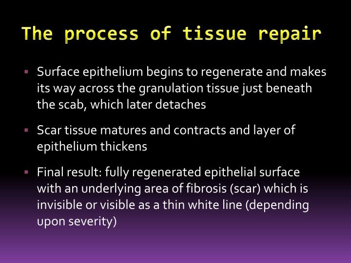 The process of tissue repair
