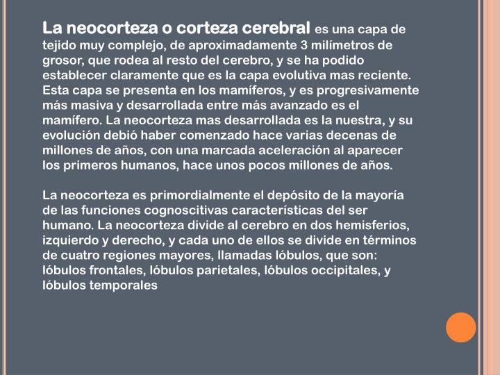 La neocorteza o corteza cerebral