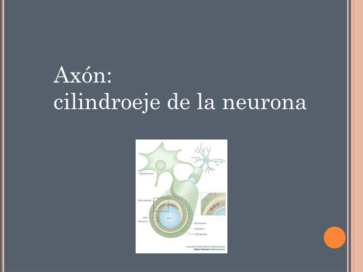 Axón: