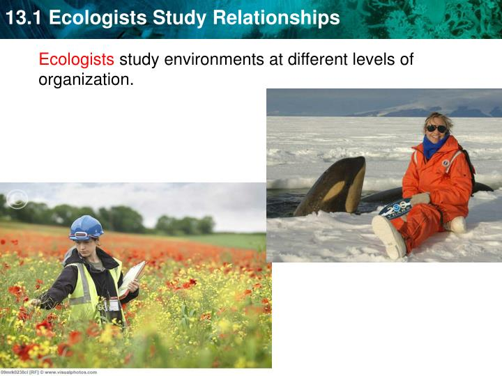 Ecologists