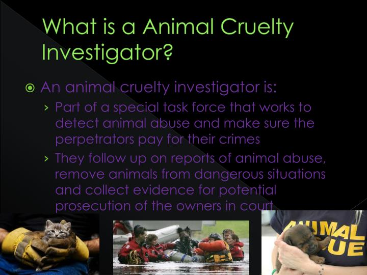 What is a animal cruelty investigator
