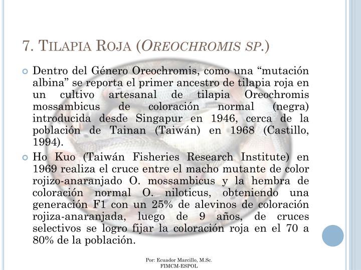 7. Tilapia Roja (