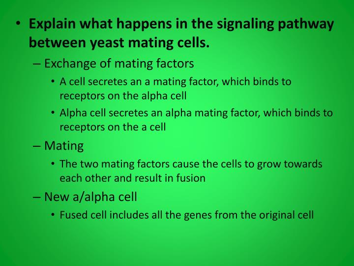 Explain what happens in the signaling pathway between yeast mating cells.