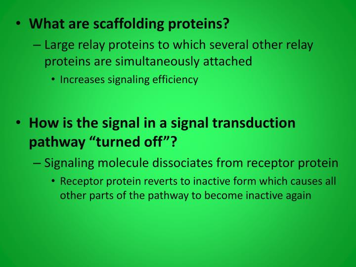 What are scaffolding proteins?