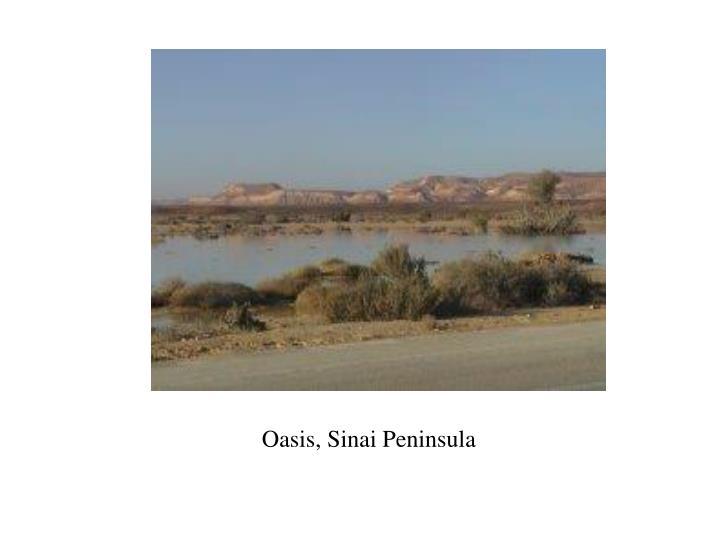 Oasis, Sinai Peninsula
