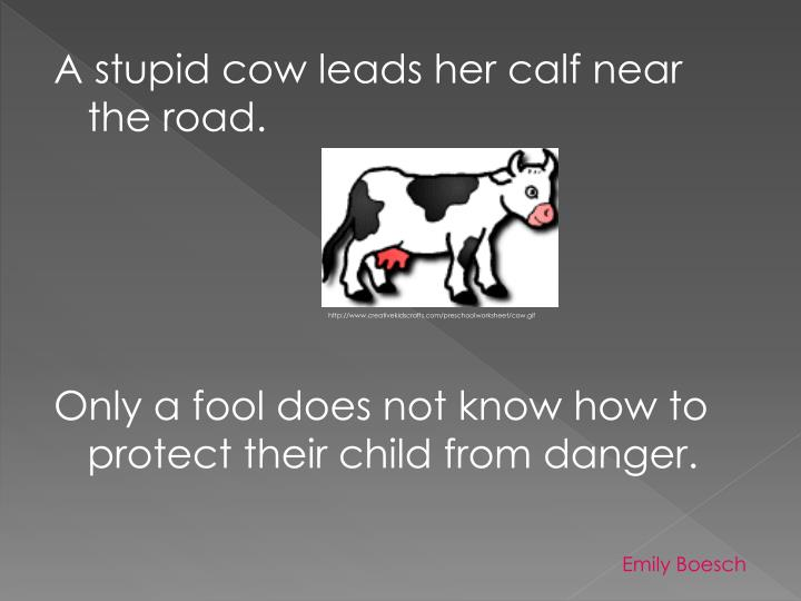 A stupid cow leads her calf near the road.