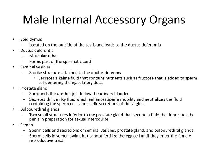 Male Internal Accessory Organs