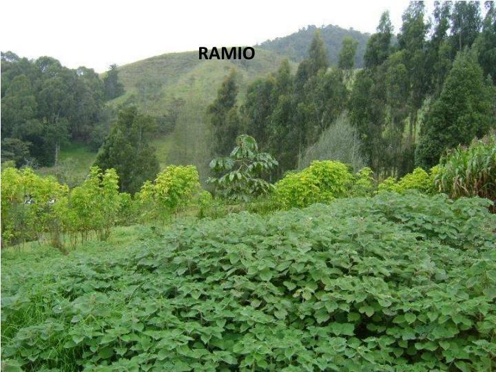 RAMIO