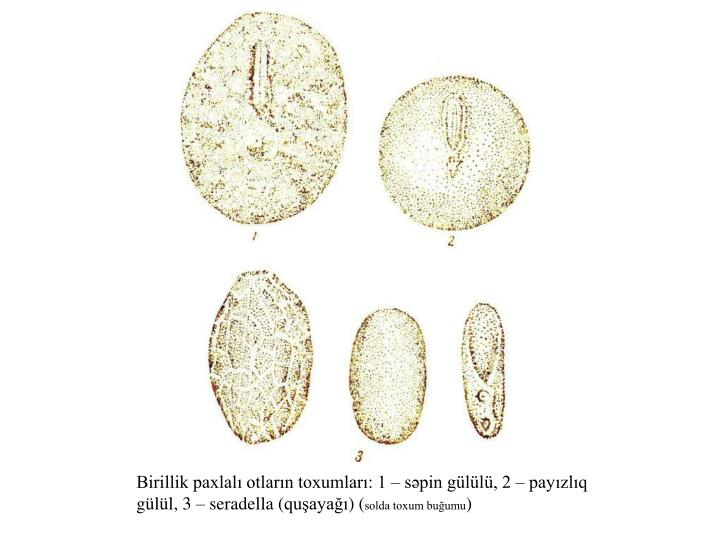 Birillik paxlalı otların toxumları: 1 – səpin gülülü, 2 – payızlıq gülül, 3 – seradella (