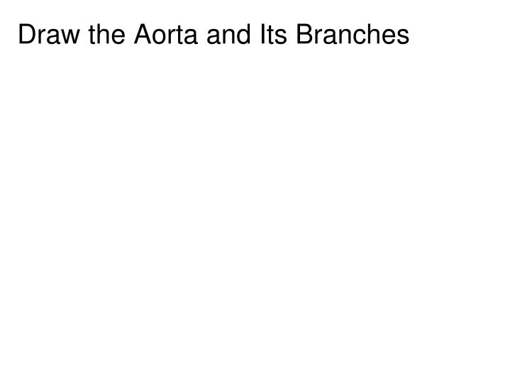 Draw the Aorta and Its Branches