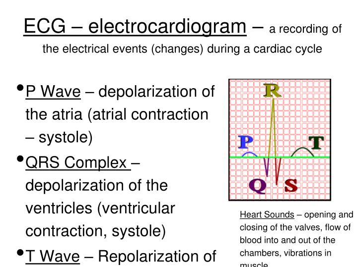 ECG – electrocardiogram