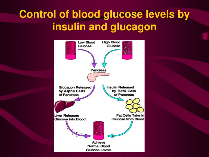 Control of blood glucose levels by insulin and glucagon