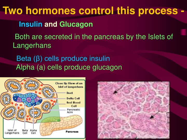 Two hormones control this process -