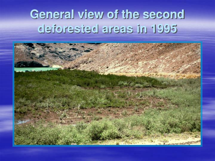 General view of the second deforested areas in 1995