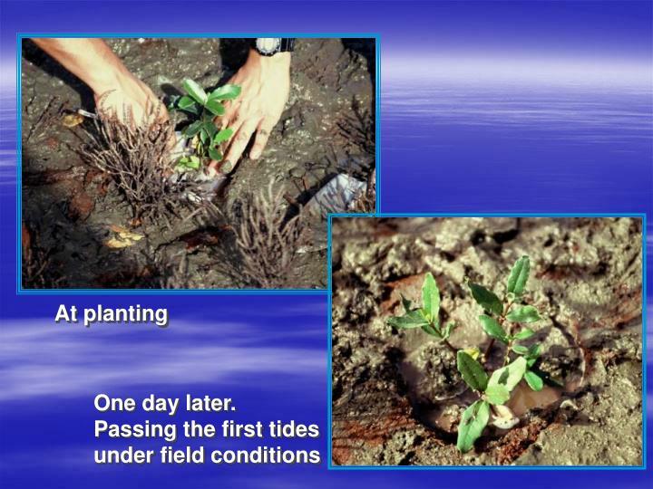 At planting
