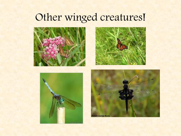 Other winged creatures!