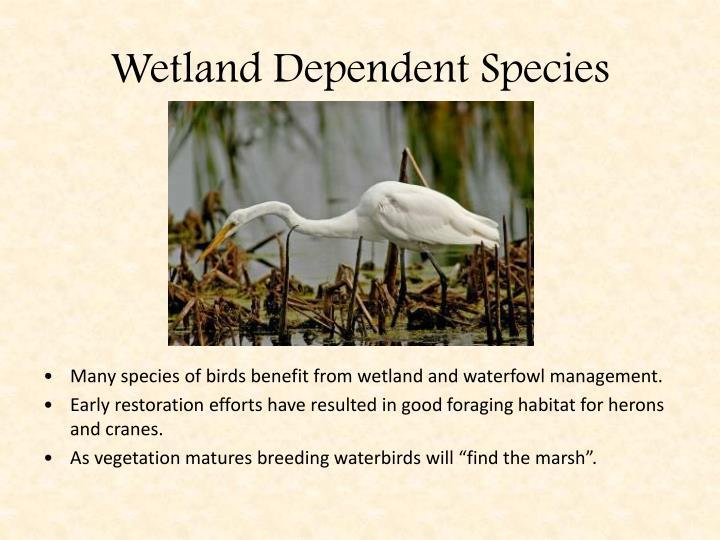 Wetland Dependent Species