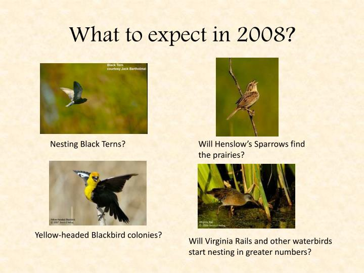 What to expect in 2008?