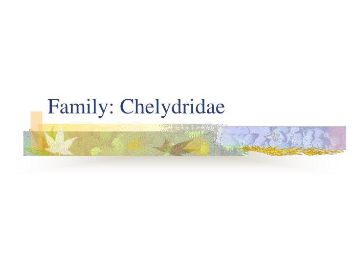 Family: Chelydridae