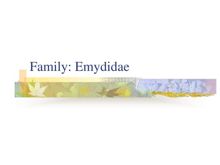 Family: Emydidae
