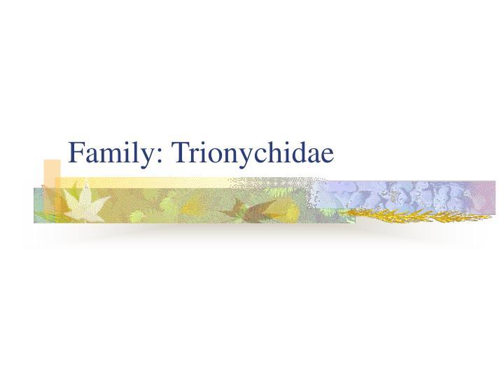 Family: Trionychidae
