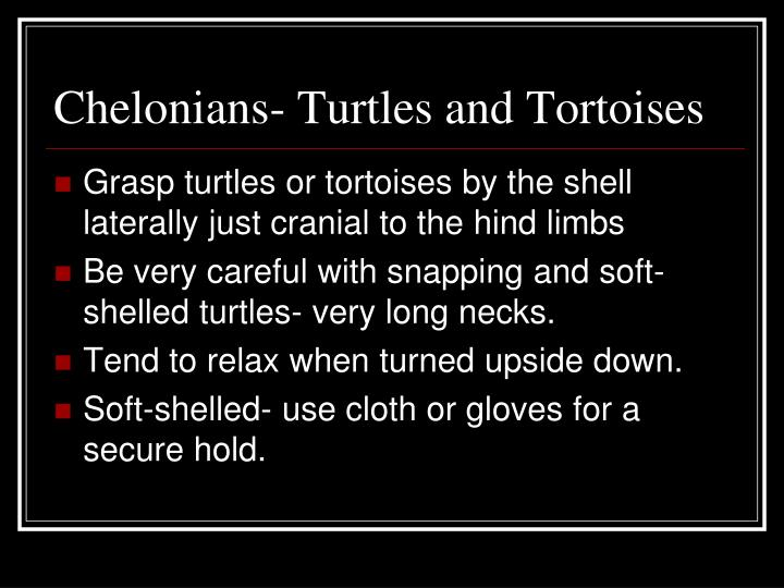 Chelonians- Turtles and Tortoises