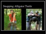 snapping alligator turtle