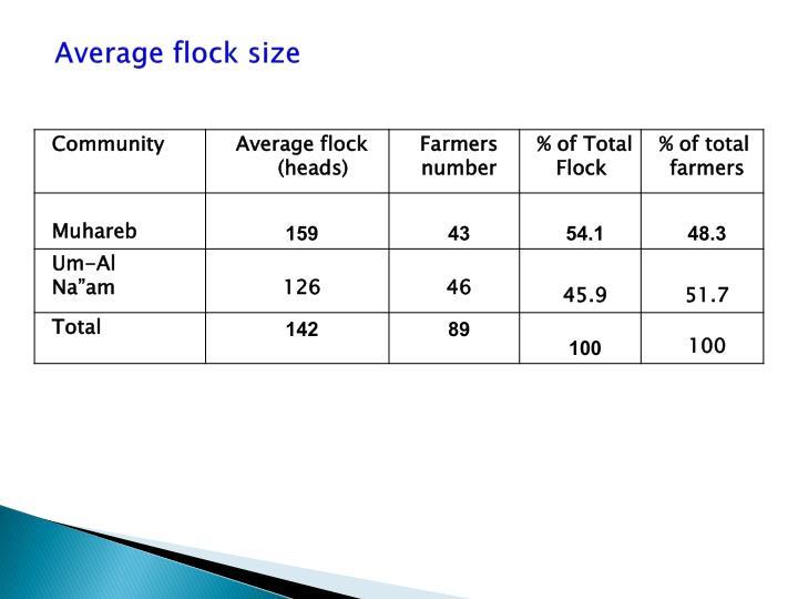 Average flock size