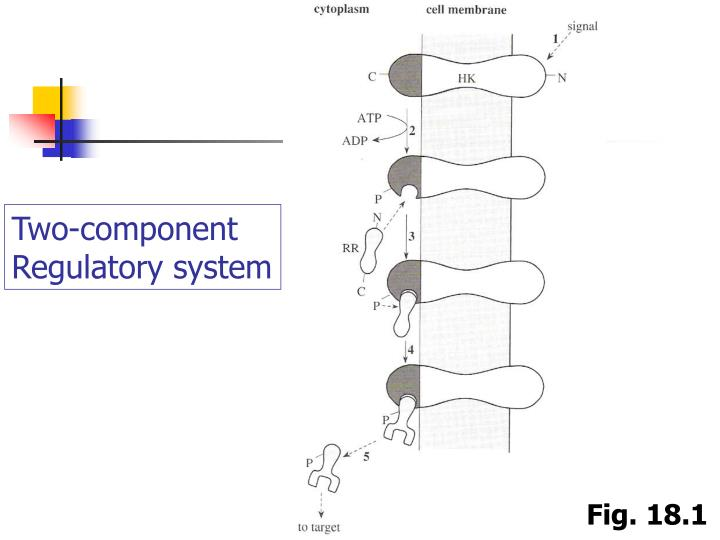 Two-component