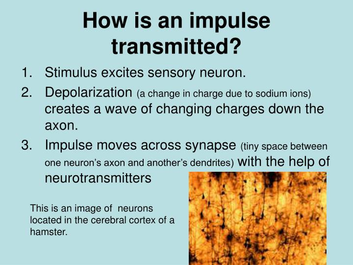 How is an impulse transmitted?