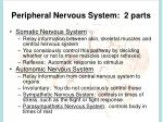 peripheral nervous system 2 parts