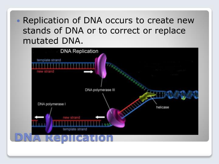 Replication of DNA occurs to create new stands of DNA or to correct or replace mutated DNA.