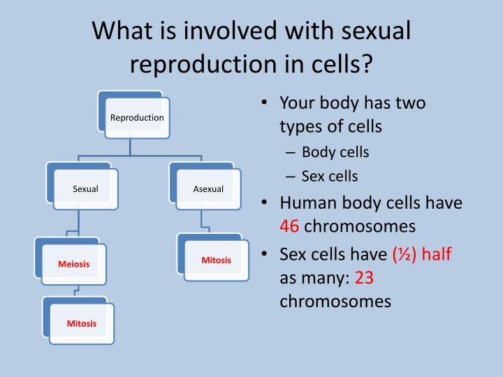 What is involved with sexual reproduction in cells