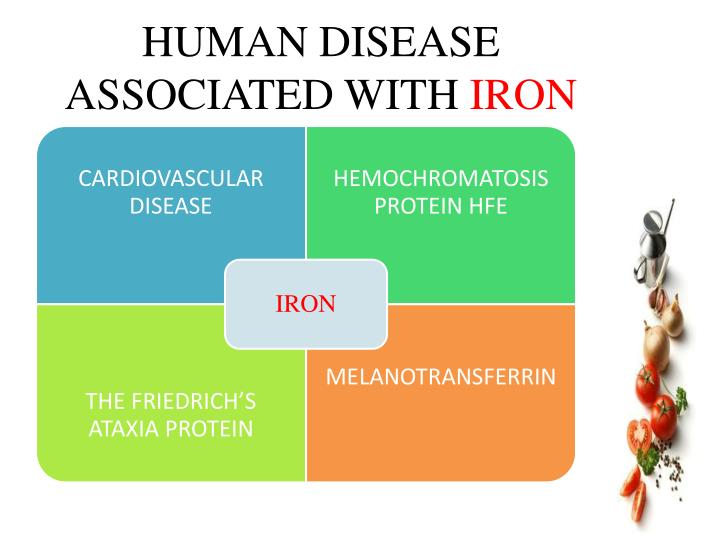 PPT - ROLE OF IRON IN HUMAN HEALTH PowerPoint Presentation ...