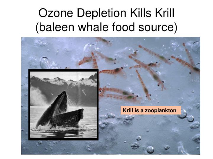 Ozone Depletion Kills Krill