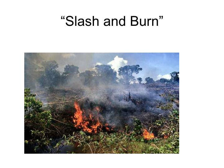 """Slash and Burn"""