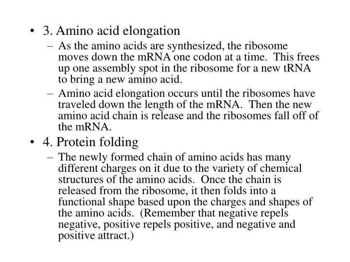 3. Amino acid elongation