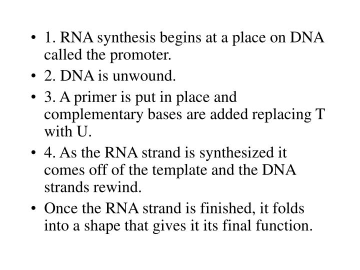 1. RNA synthesis begins at a place on DNA called the promoter.