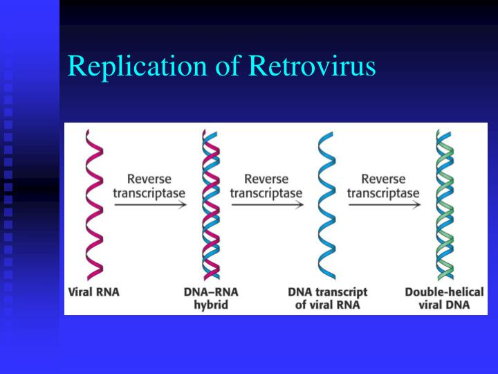 Replication of Retrovirus